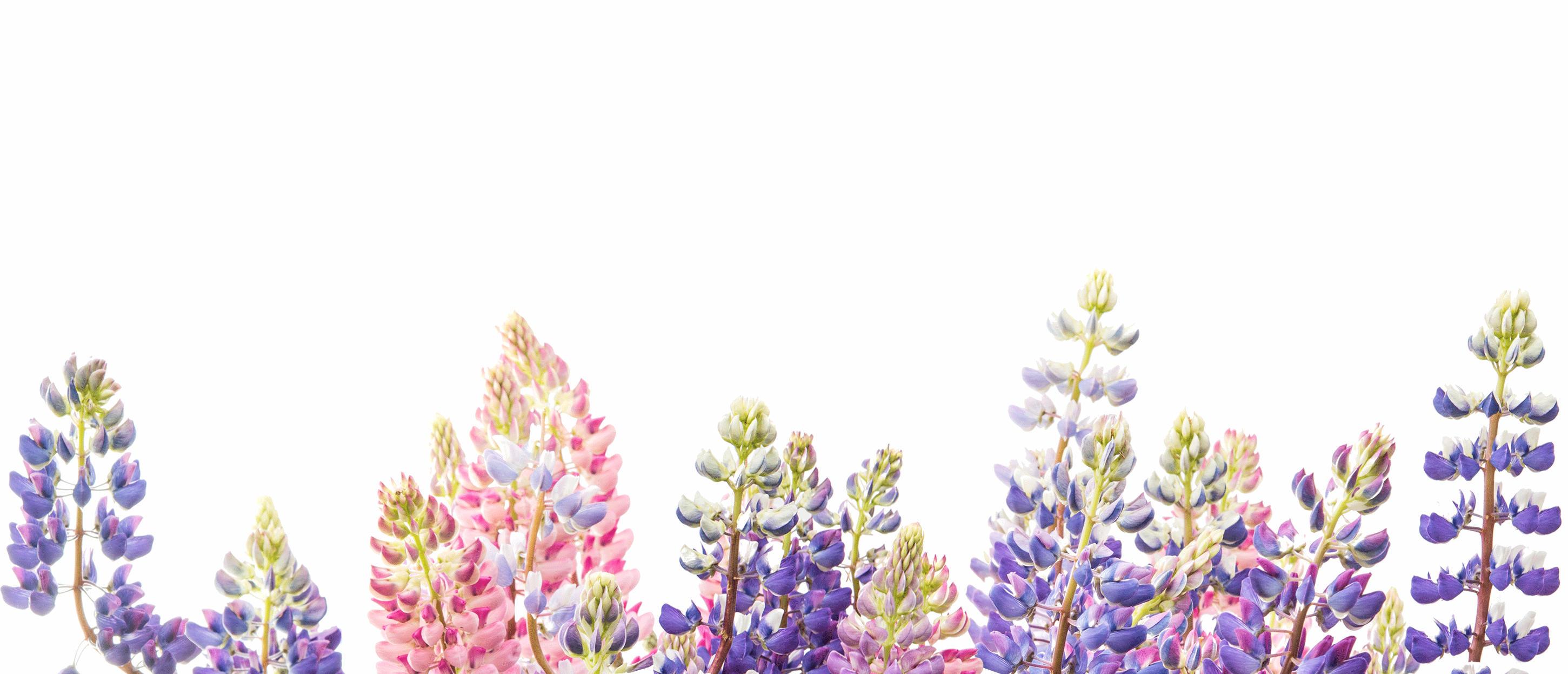 Spierts Bloemen & Planten